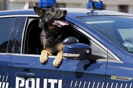Politihund standsede flygtende bilist i Randers