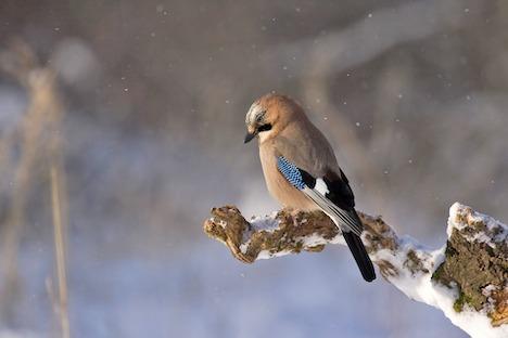 Foto-foredrag om Randers' rige fugleliv